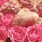 Bedingungslose Liebe – der Schlüssel zu deiner Heilung